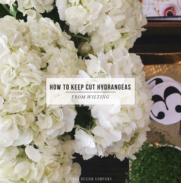 How To Keep Hydrangeas from Wilting / jones design company