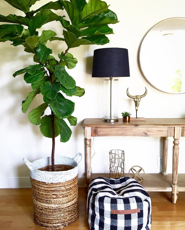 figtree houseseven - Fiddle Leaf Fig Tree